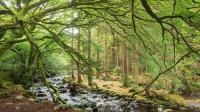 Ireland to Plant 440 Million Trees in 20 Years to Fight Climate Change