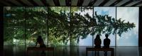 Among the Trees: A virtual tour | Hayward Gallery