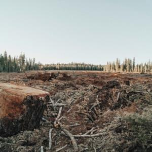 Investors urge companies to advance no-deforestation efforts